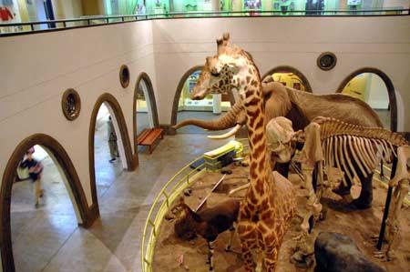 Nairobi-National-Museum (1)